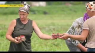 На Кременеччині знайшли найбагатше українське село