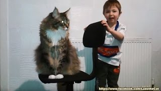 4yo kid tames World's BIGGEST house cat!