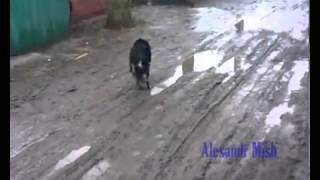People helping animals - Люди приходят на помощь животным(, 2013-05-30T14:41:05.000Z)