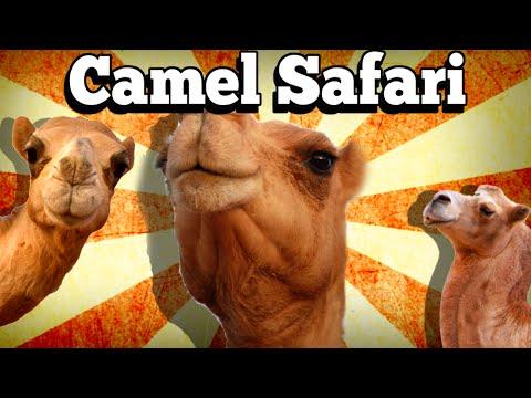 Qatar Travel Video Pt. 2, Camel Safari, Dhow Boat, Qatar Airways, Adventure. Jenn Barlow