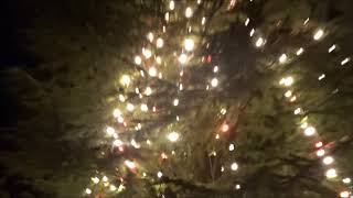 171215関学クリスマスツリー thumbnail