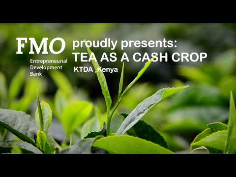 kenya tea development it analysis Directors of factories affiliated to the kenya tea development agency (ktda) in meru want the land policy changed to halt land subdivision in tea zones.