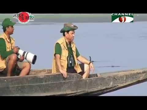 Nature and Life - Episode 216 (Hakaluki Haor)