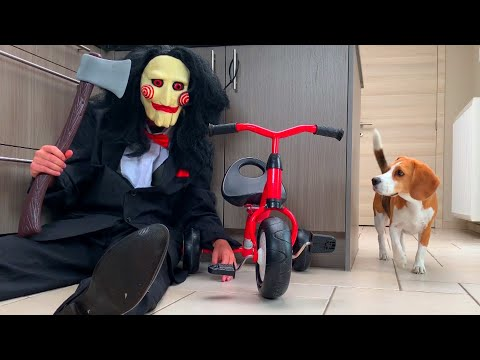Funny Dogs Vs Clown Prank  : Funny Dogs Louie and Marie