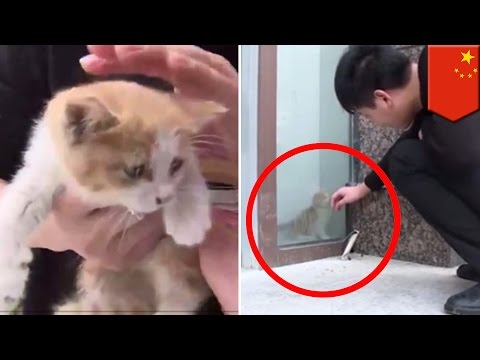 Thumbnail: Kitten rescue: Unlucky kitten rescued after trapped behind glass wall for three days - TomoNews