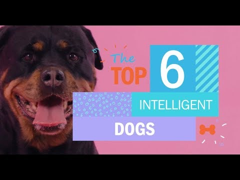 the-top-6-most-intelligent-dogs