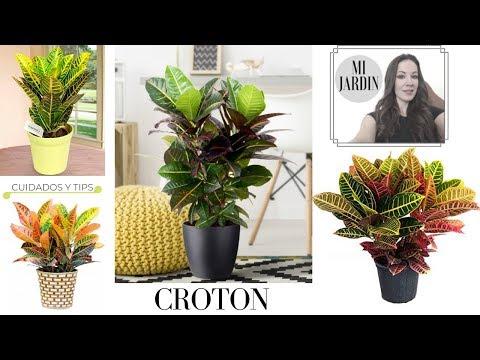 plantas-de-interior-perfectas-*-cuidados-y-tips