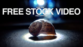 free  video stock footage -100fps / Snail Tank with light effects | Makro Zoom Shot