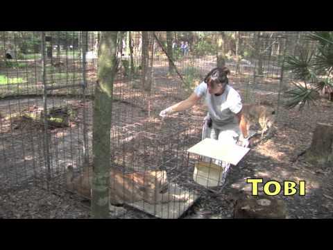 Flea Treatment at Big Cat Rescue!