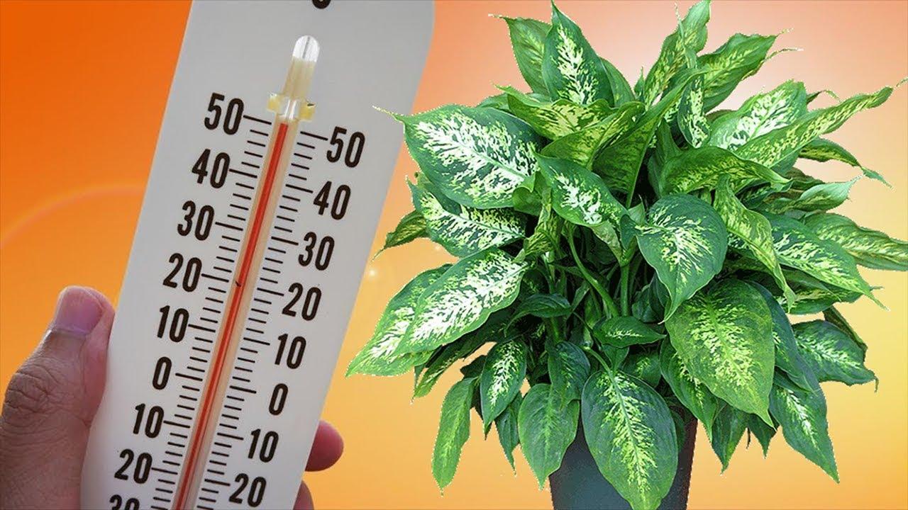 ЖАРА для комнатных растений. Спасаем растения от летней жары!