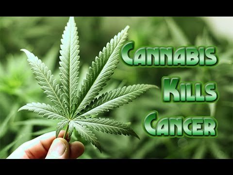 Image result for Writer John Vibes Discusses His Cancer Treatment with Cannabis Oil, B17: True Solutions