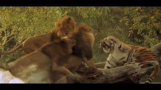 Top 10 Strongest Wild Animals