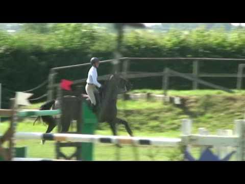 ♥ Sobriquet d'Hoogpoort- jumping horse  by Quick Star