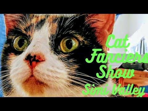 Cat Fanciers Association Show, Simi Valley Ca. July 13, 2019 #catfanciersassociation