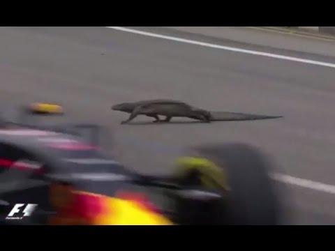 Giant Lizard on Singapore  F1 Grand Prix Race Track - Red Bull driver Max Verstappen near miss