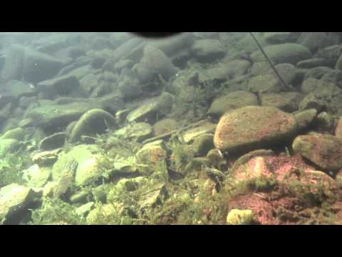 Chatanika Dredge Underwater