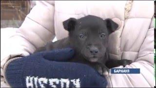 Полицейские разыскивают в Барнауле возможных свидетелей убийства бездомного щенка