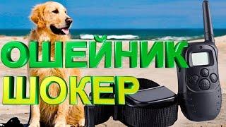 Ошейник шокер для дрессировки и воспитания собак