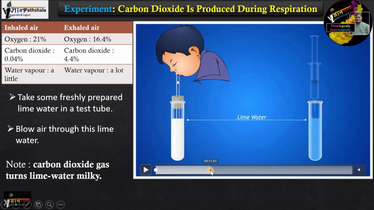 Experiment Carbon dioxide is produced during respiration