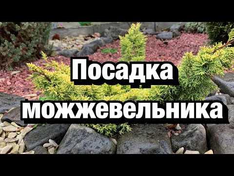 Вопрос: Есть ли в лесах средней полосы России реликтовый можжевельник?