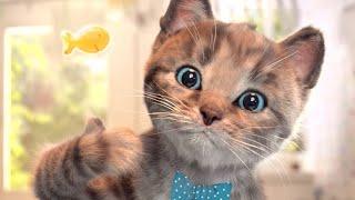 Dobrodružství roztomilého malého koťátka  Little Kitten