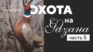 Супер охота на фазана с собаками. #часть 5