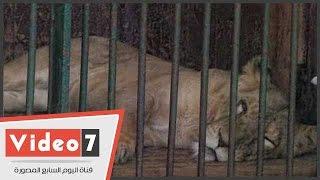 ظهور الإعياء على حيوانات حديقة الجيزة فى أول أيام عيد الأضحى