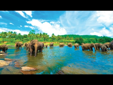Sri Lanka 2017 Buddha, Elephants, Ancient Ruins, Jungles and Beaches