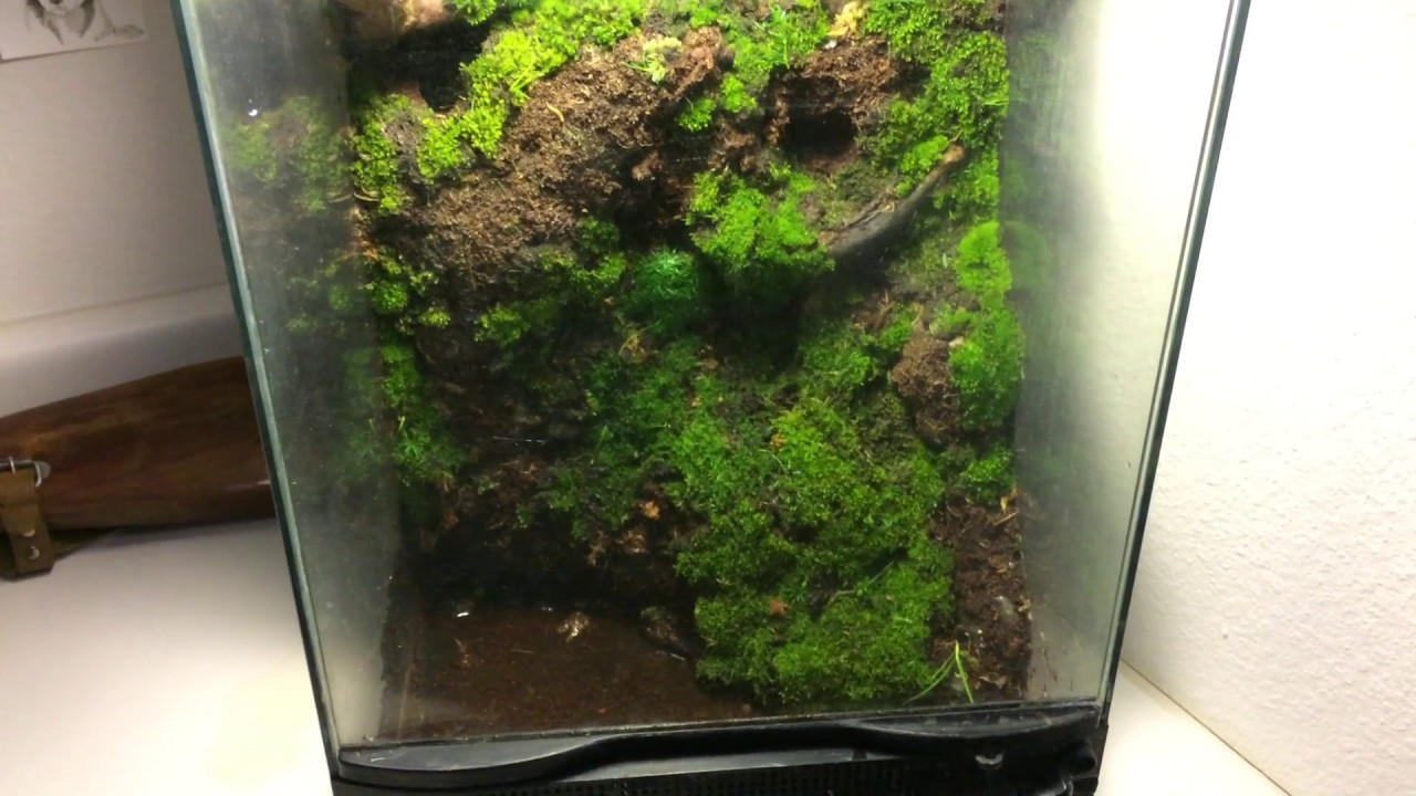 New Moss Terrarium Project You