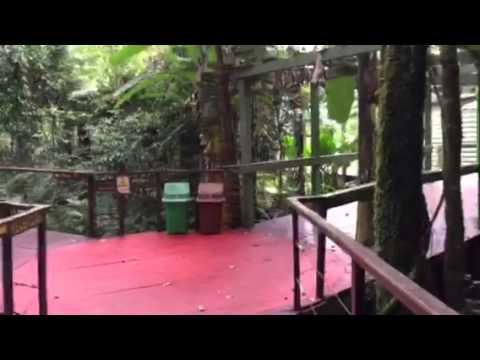 La Cantera Jungle Hotel