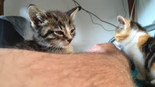 Gambar cover 14/8/x 3 kittens 20