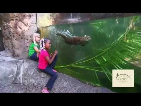 What you can see at the Palm Beach Zoo & Conservation in 30 seconds