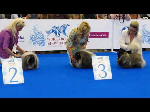 World Dog Show 2016 пекинесы юниоры