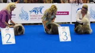 World Dog Show 2016 пекинесы юниоры
