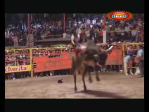 Así se monta a Grapa¡¡¡ Trujillo del Rosario,Oax