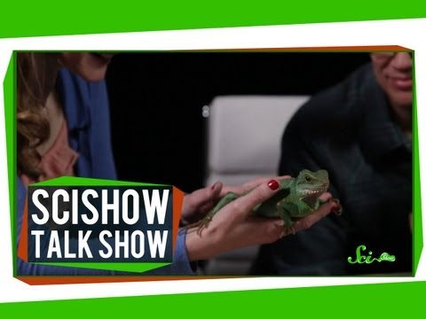 Unstumped Hank & A Chinese Water Dragon: SciShow Talk Show #14