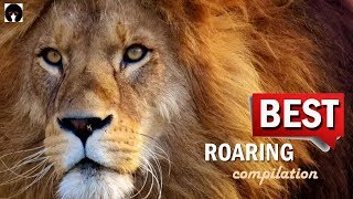 My ROARING COMPILATION - BEST ROARS on YouTube (revised)