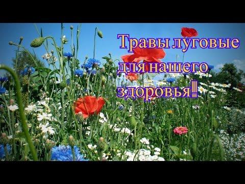 Цветы и растения - Glav-