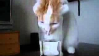 Кот и стакан воды))
