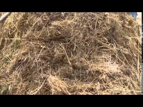 Грибы по алфавиту / Съедобные грибы, ягоды, травы