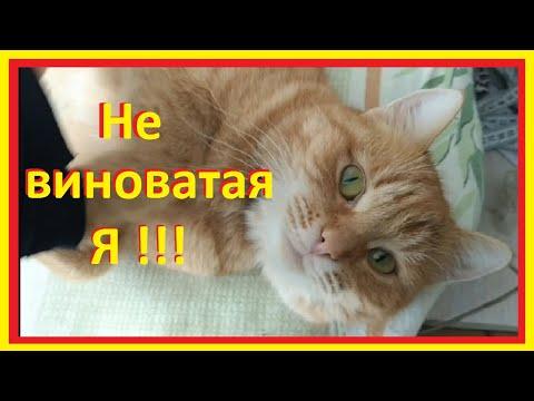 ЛИШАЙ у кошки//ЛЕЧЕНИЕ