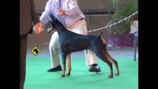 """""""perros En Acción"""" Córdoba Kennel Club"""