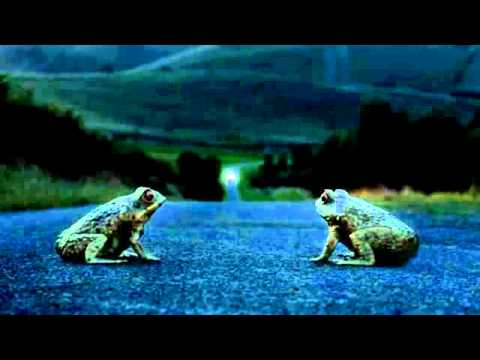 "Ford - ""Cane Toad Road"" - JWT Australia Pty. Ltd."