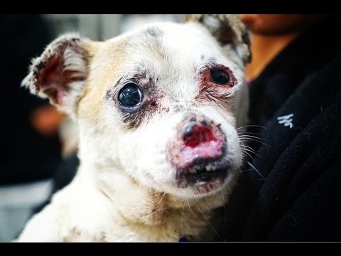 AMAZING TRANSFORMATION OF DOG RESCUED WITH MISSING NOSE ! MUST SEE THIS!