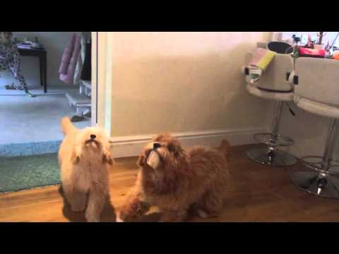 Hilarious video of puppy fail. Slow motion. So funny!