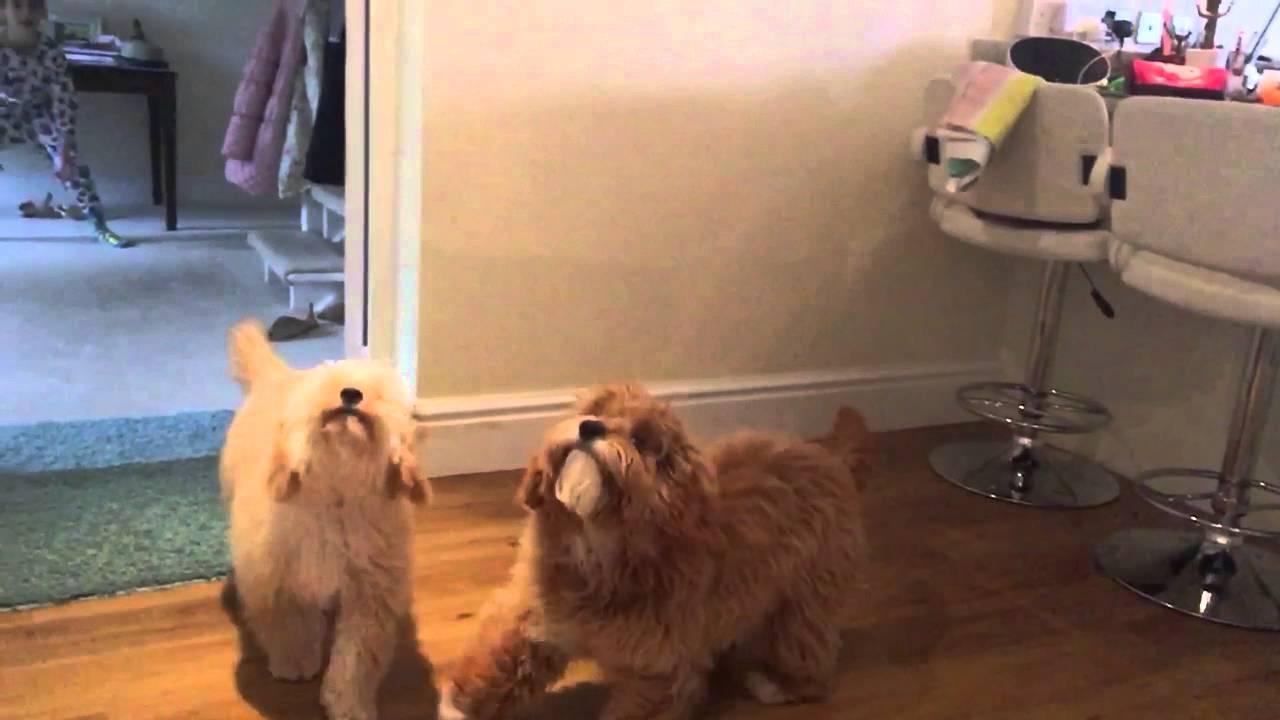 Hilarious video of pet fail. Sluggish movement. So humorous!