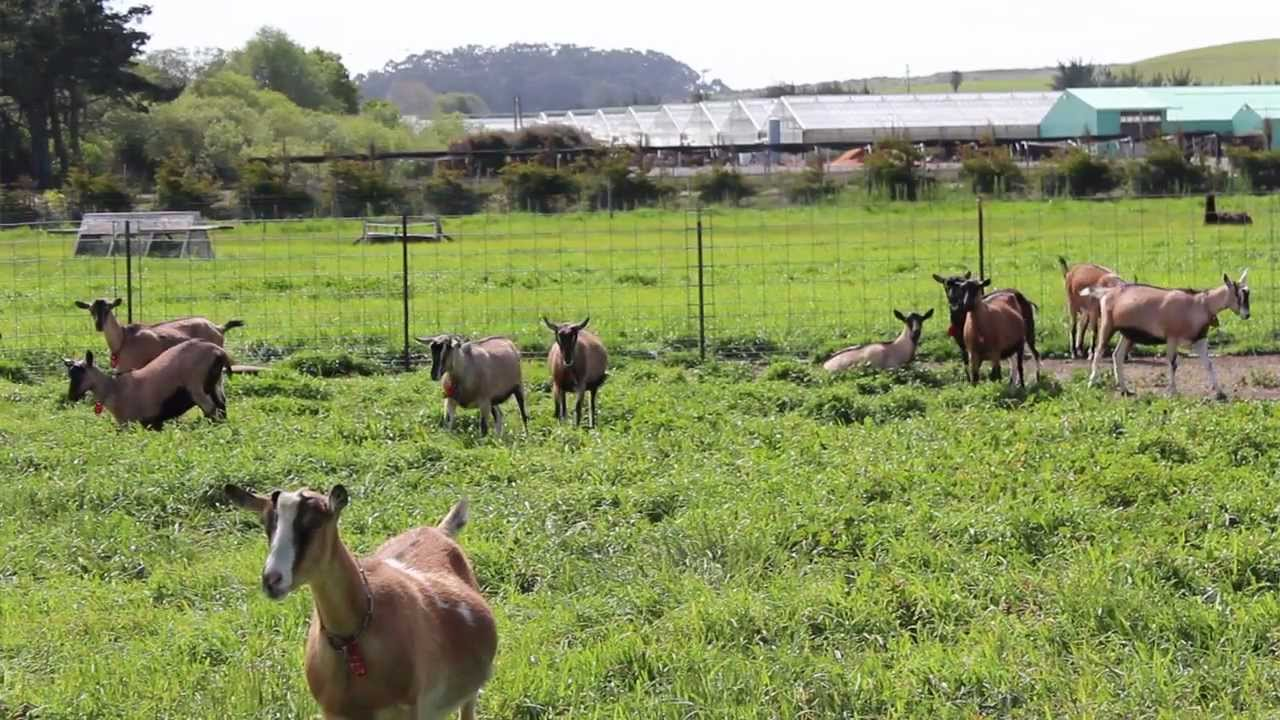 Rainwater Catchment & Water Recycling At Harley Farms Goat