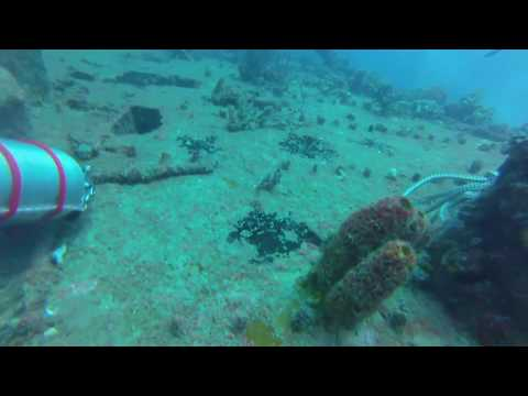 Rodeo 25 Wreck Dive - Pompano Beach, FL - Exploration, Search & Recovery