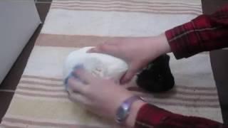 Comment nettoyer son cochon d'Inde ?