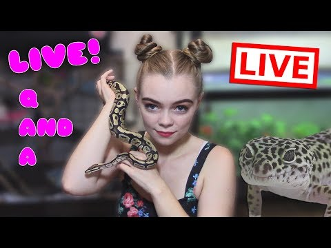 Pet Q and A LIVE! Ask Me Anything!